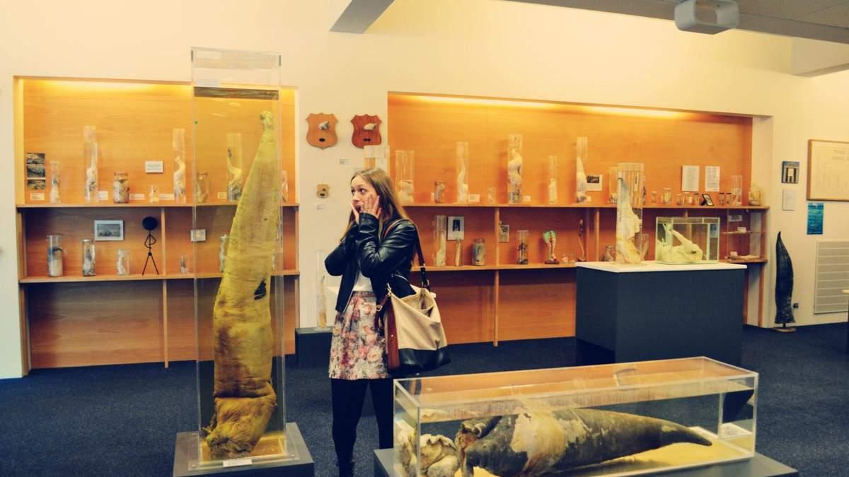 Коллекции фаллосов и волос: странные музеи мира, которые действительно существуют