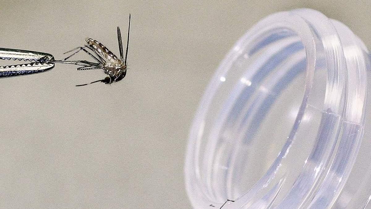 Как защититься от комаров: простые советы