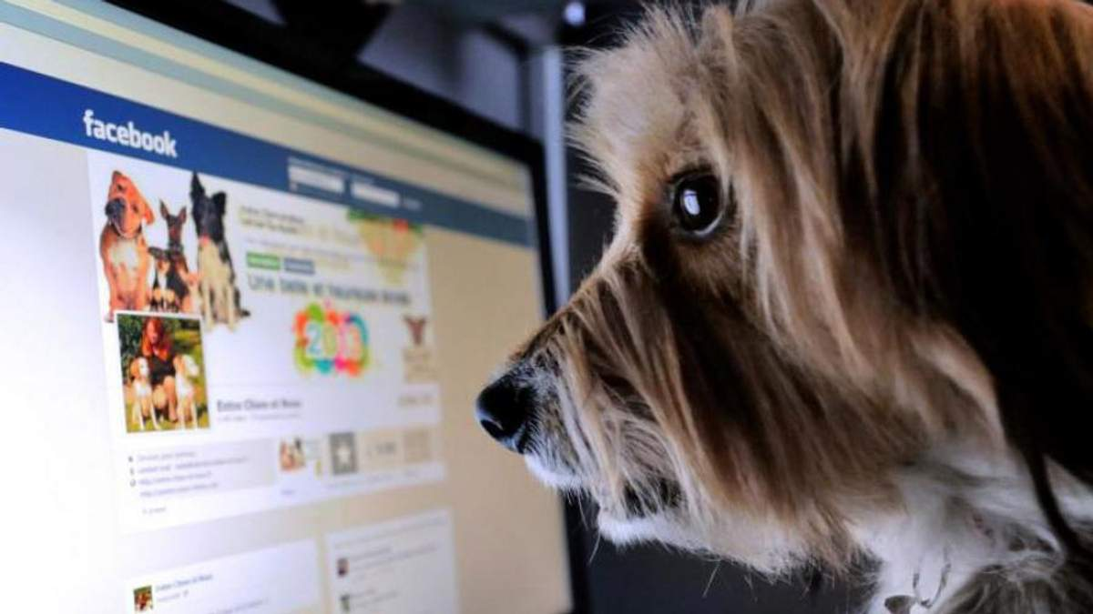 Пользователей Facebook поделили на 4 типа