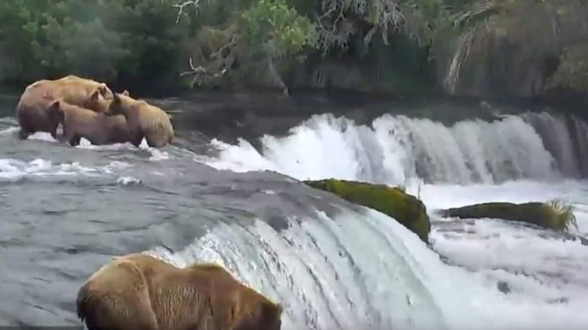 Google запустив прямі трансляції дикої природи