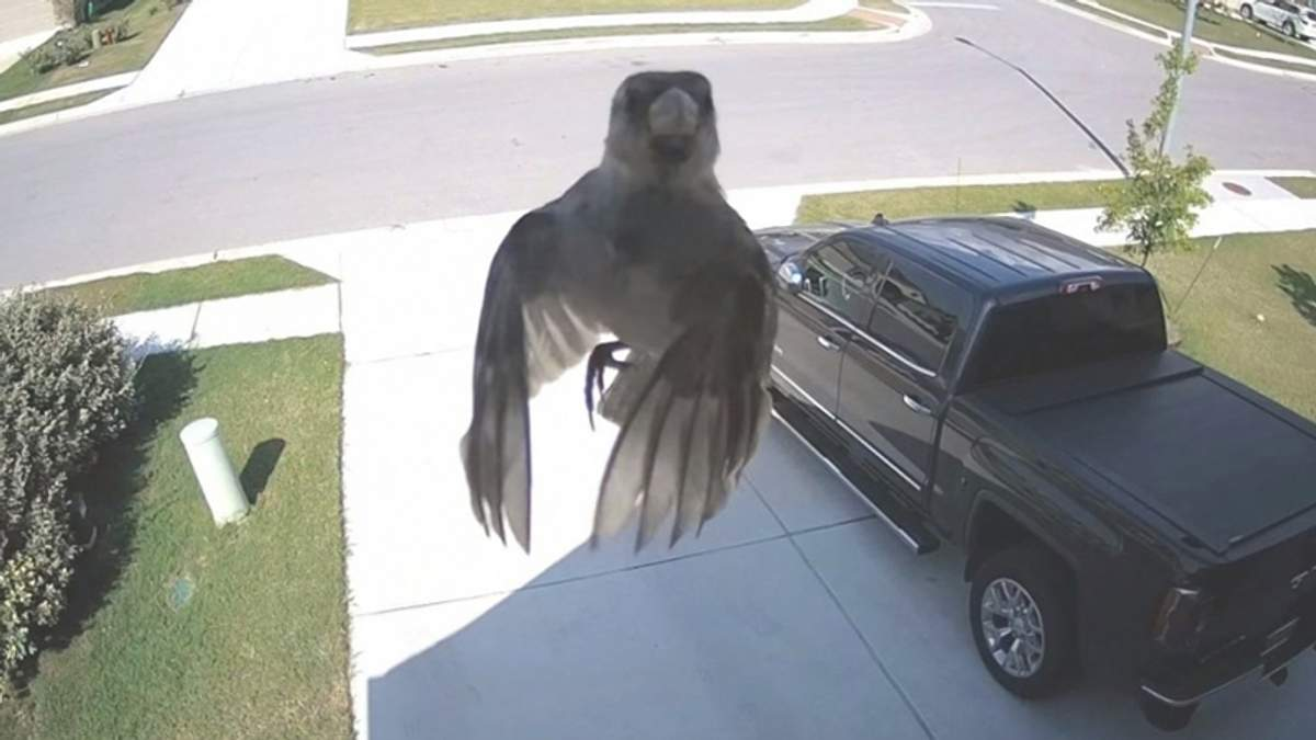 В сети показали, как воробей завис в воздухе без взмахов крыльев