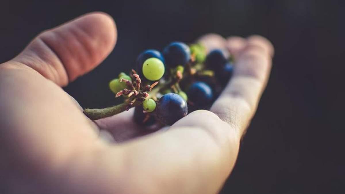 Як вибрати виноград: корисні поради