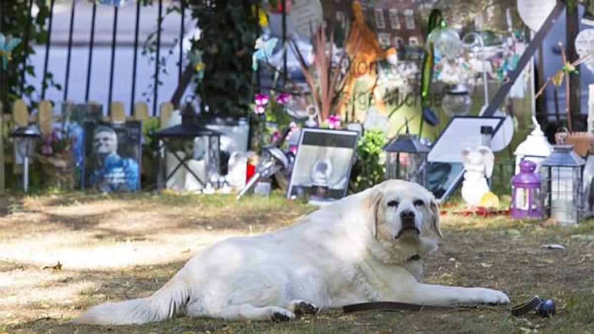 Новый Хатико: пес Джорджа Майкла уже несколько месяцев ждет хозяина у его мемориала