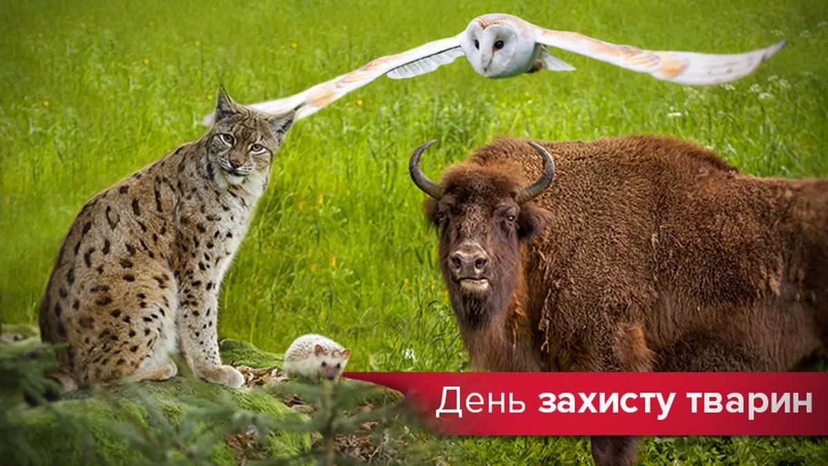 День захисту тварин 2019 - фото тварин України які вимирають