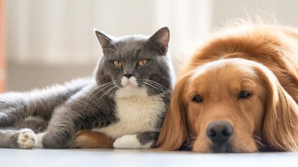 Кошки или собаки: ученые выяснили, кто умнее