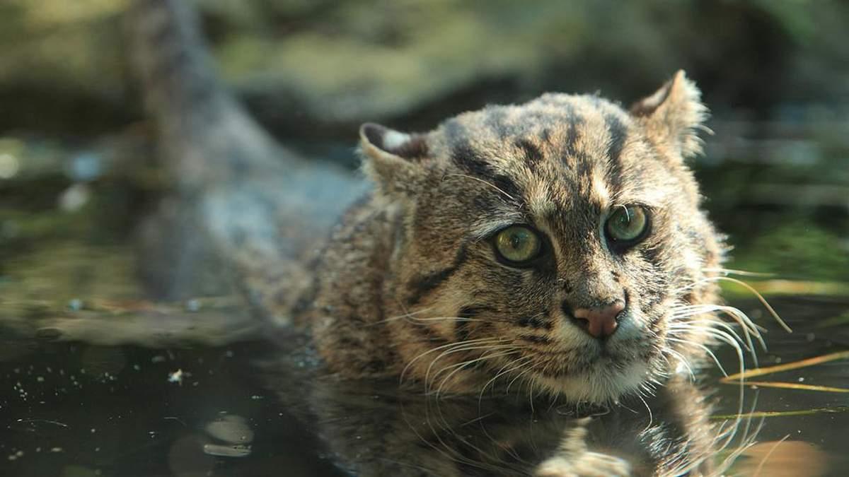 Які тварини у 2017 році зникли назавжди: еколог назвав перелік