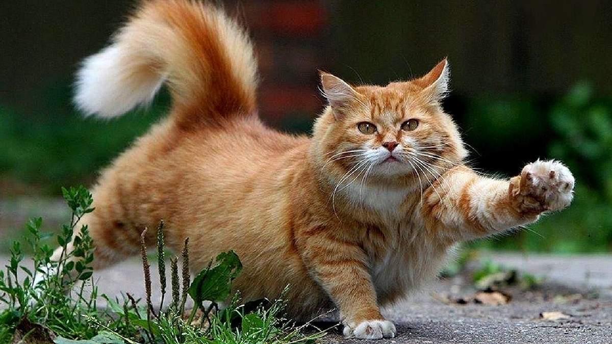 Вчені з'ясували неочікувану подібність між людьми та котами