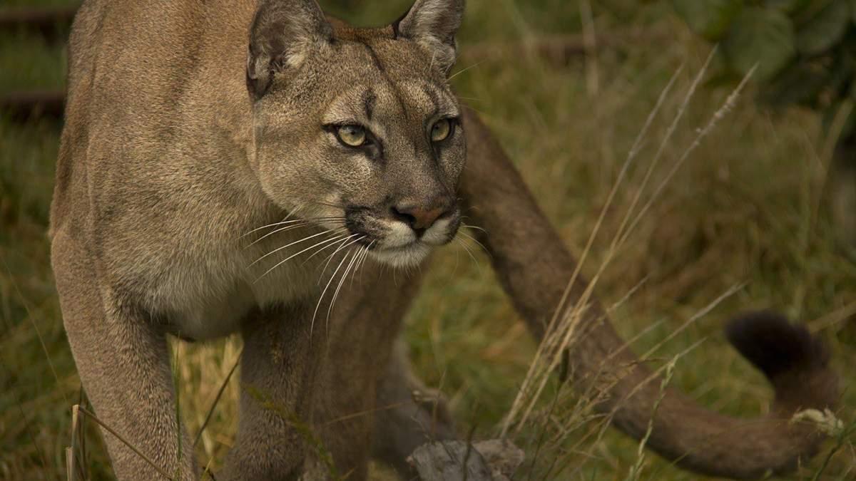 Рідкісний вид тварин повністю вимер: деталі