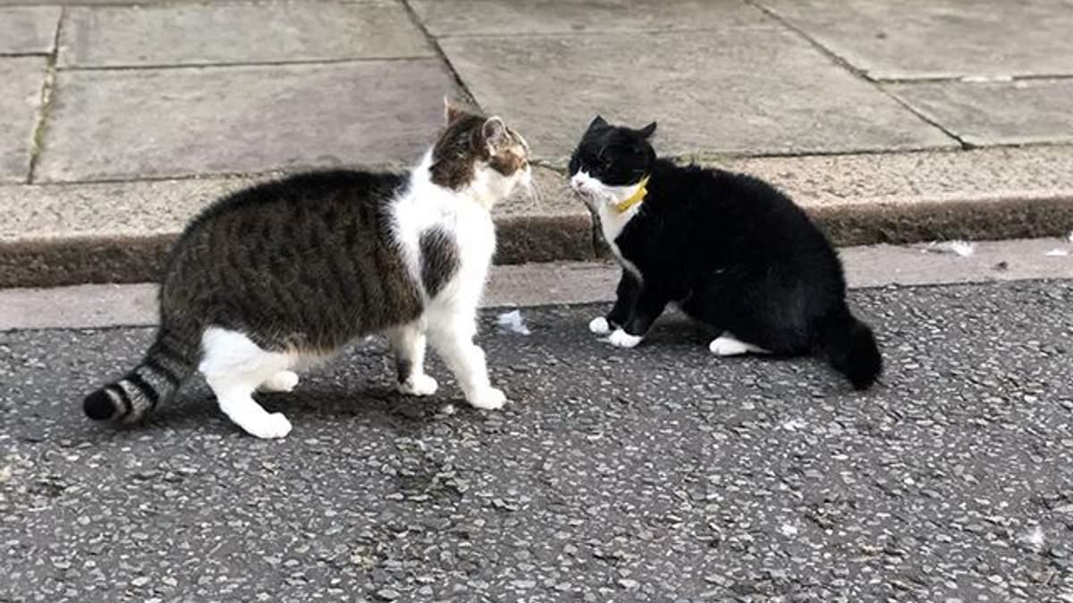 """Кіт з офісу прем'єра Британії побився із """"колегою"""" з МЗС: фото"""