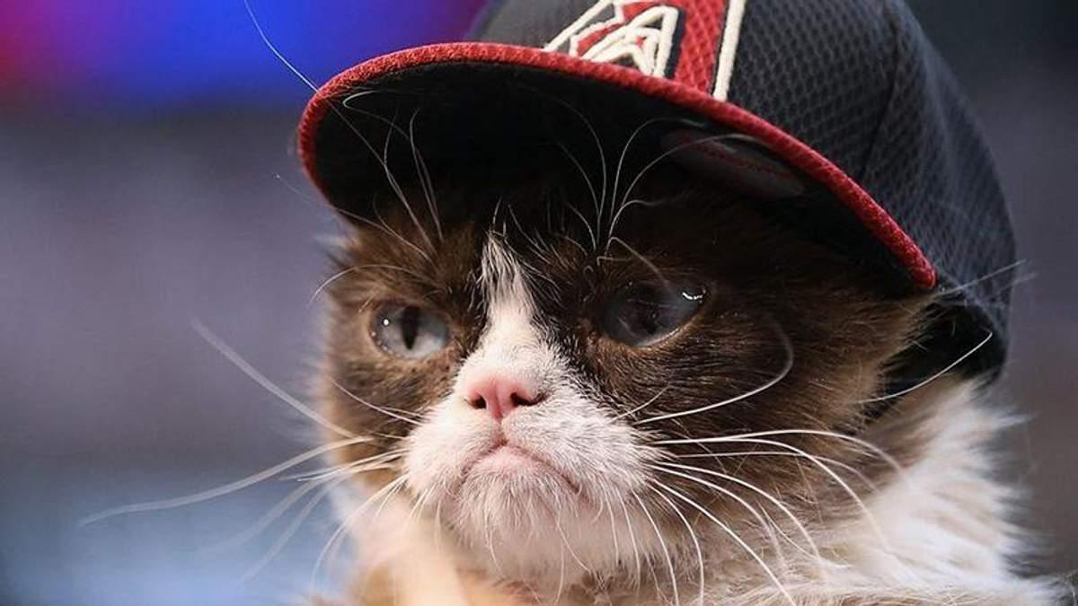 Кіт вразив мережу своєю нахабністю: курйозне відео