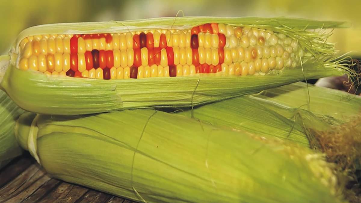 ГМО-кукурудза корисна для здоров'я: результати досліджень