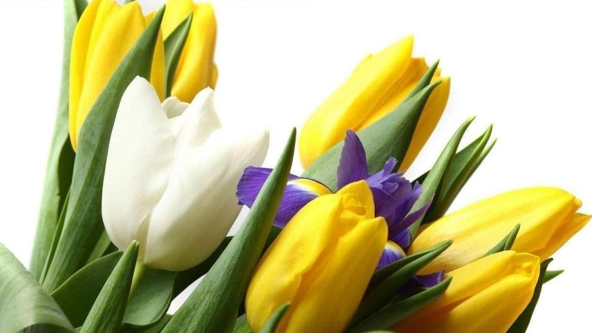 Що подарувати на 8 березня 2020 – подарунки дівчині на 8 березня