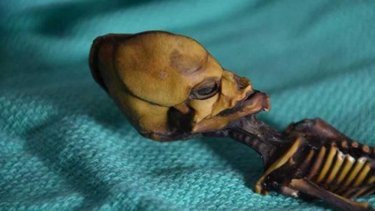 """Вчені розкрили таємницю скелета """"інопланетянина"""": моторошні фото"""