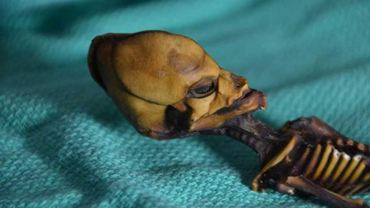 """Ученые раскрыли тайну скелета """"инопланетянина"""": жуткие фото"""