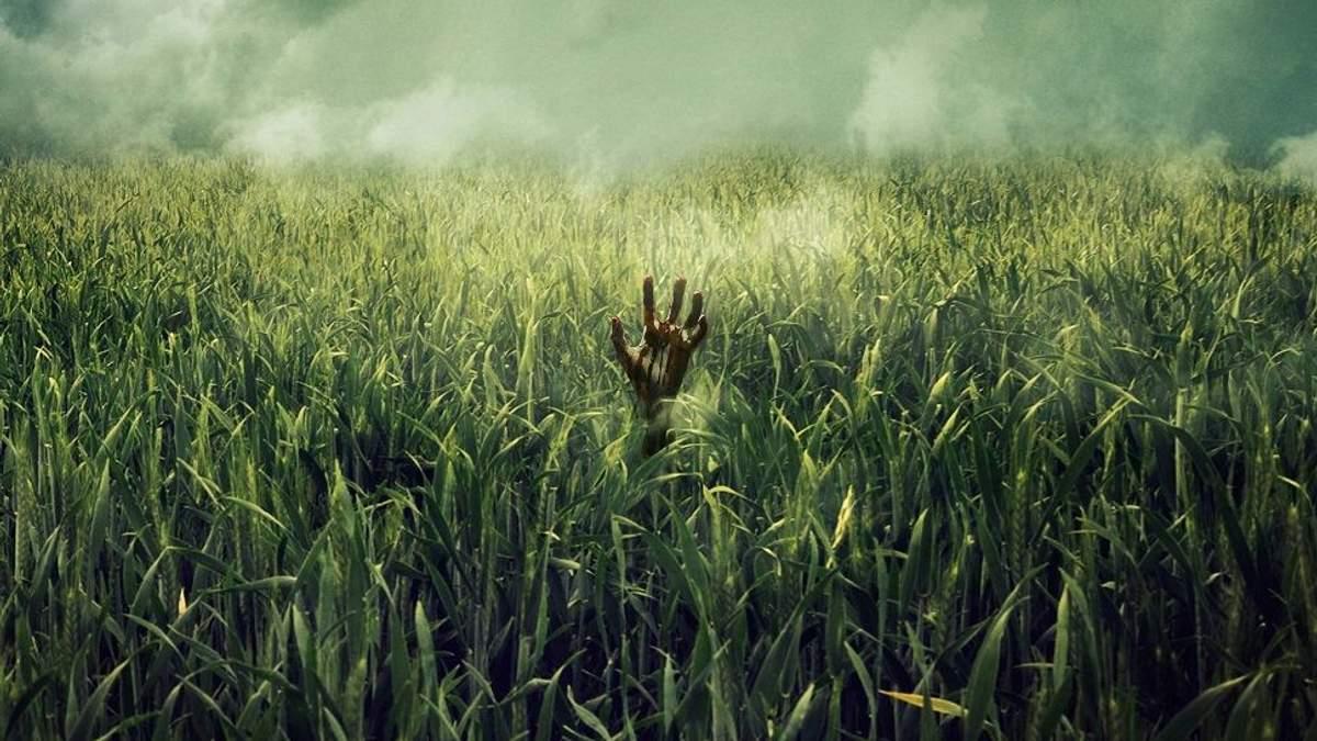 """В высокой траве"": Netflix взялись за экранизацию книги Стивена Кинга"