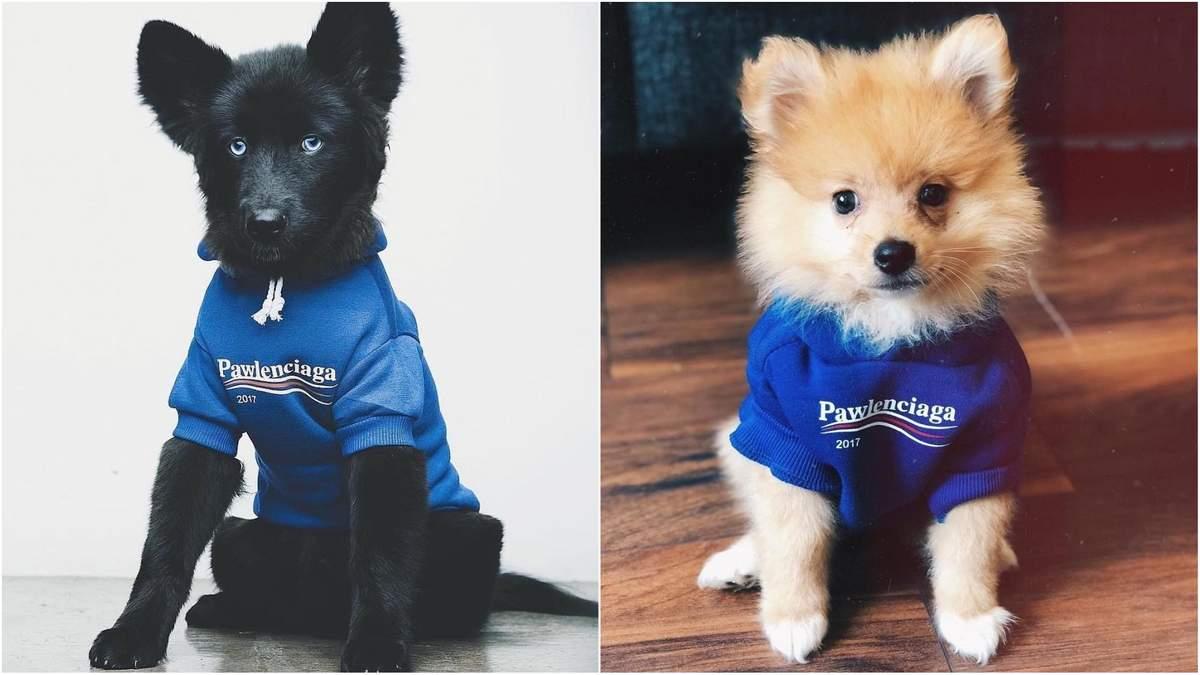 Модний бренд Balenciaga подав в суд на виробника одягу для собак Pawlenciaga