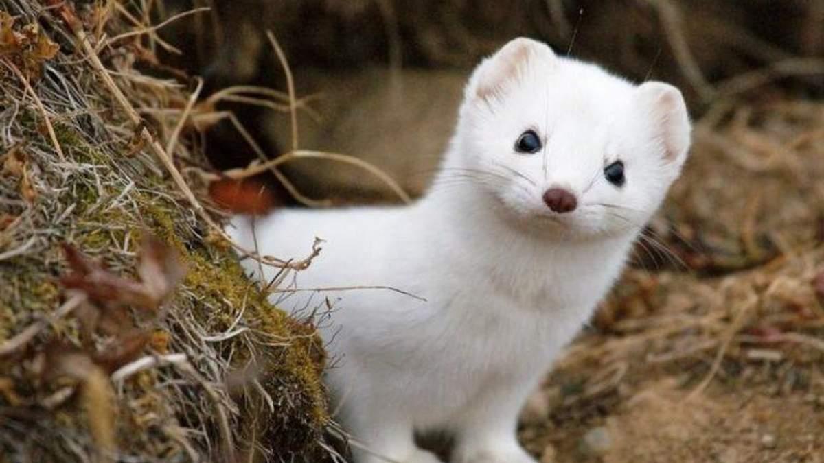 Chanel больше не использует мех и кожу экзотических животных