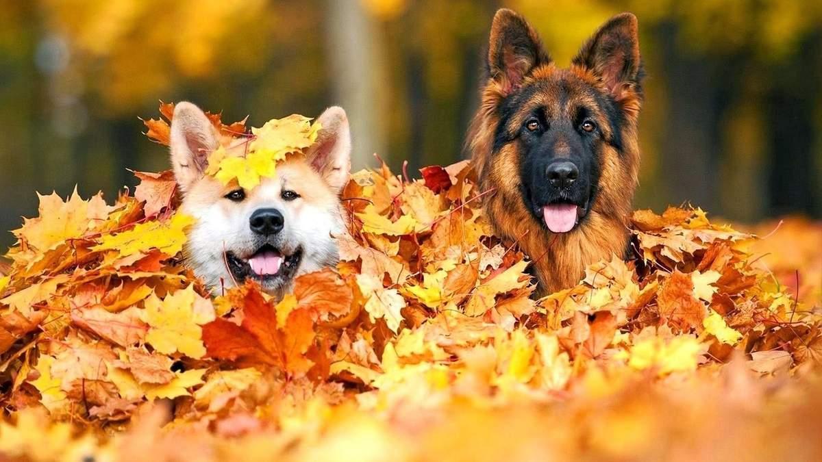 Вихідні у листопаді: скільки днів ми будемо відпочивати в останній місяць осені