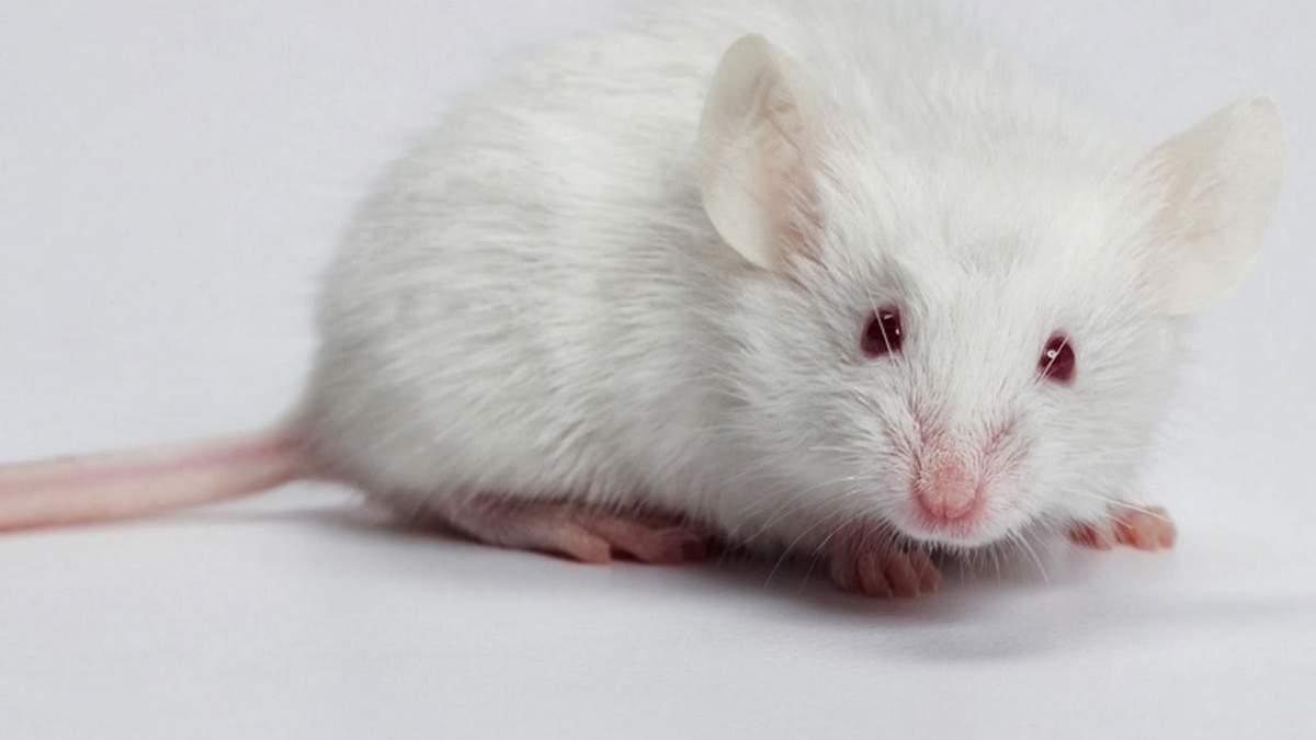Гороскоп на 2020 для всех знаков Зодиака – гороскоп на 2020 год Крысы