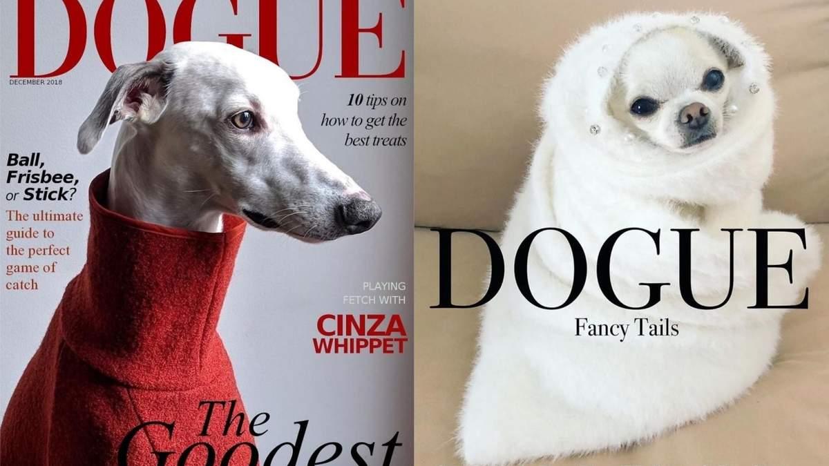 Якби собаки були зірками журналу Dogue