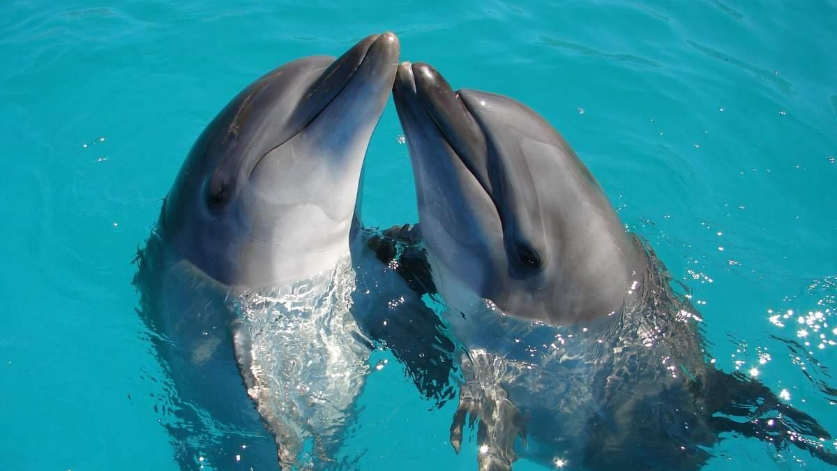 Почему не стоит ходить в дельфинарии и вестись на эффективность терапии с млекопитающими
