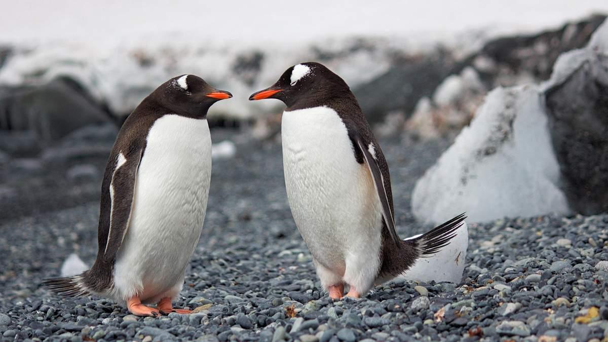 Дружеские объятия нужны всем, без исключения: подборка милых животных