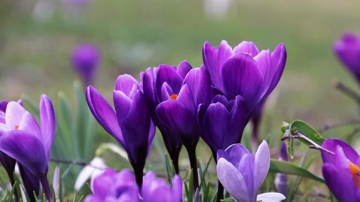 Выходные на 8 марта 2021, Украина – календарь как отдыхаем в марте