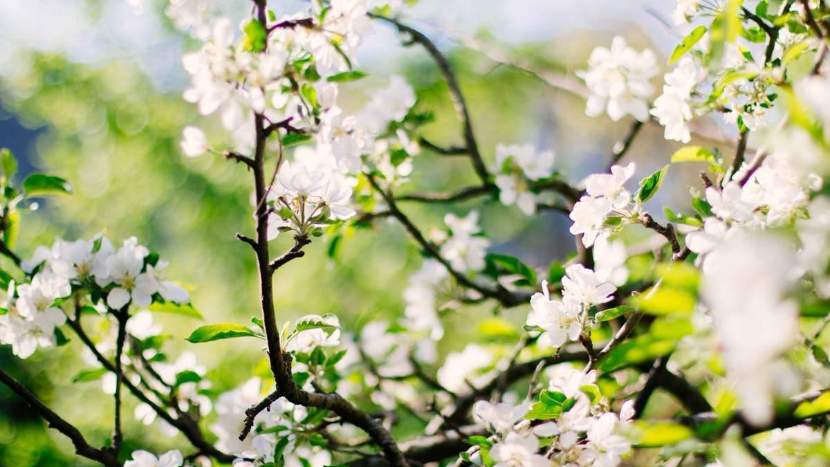Выходные в мае 2021 года: сколько дней украинцы будут отдыхать на Пасху и майские праздники