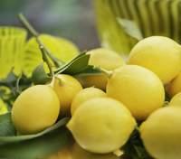 Лимон – користь та застосування в гасторономії: цікаві поради від Марко Черветті