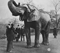 Животным в цирке не место: печальные истории самых известных слонов мира