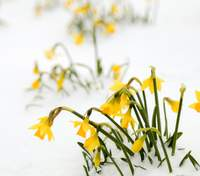 Последний день зимы: картинки-поздравления, которые пробудят весну в душе