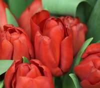 Картинки-поздравления с праздником 8 марта: поздравления, от которых будет расцветать улыбка