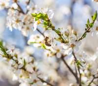 21 квітня – яке сьогодні свято і що не можна робити в цей день