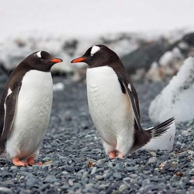 Дружеские объятия нужны всем без исключения: подборка милых животных, которые нашли себе друзей