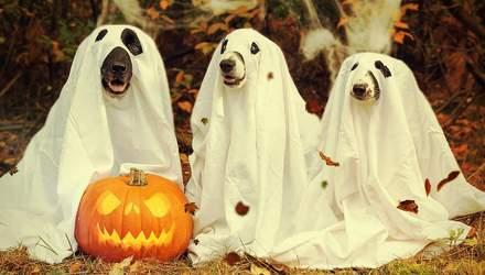 Праздничные картинки на Хэллоуин: жуткая подборка