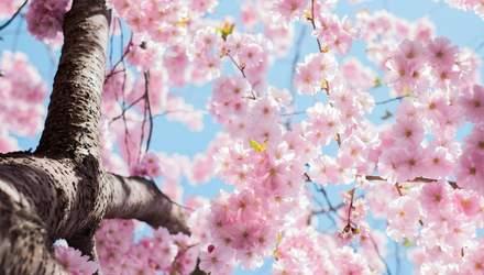Картинки с первым днем весны: поздравления, которые заставят расцвести