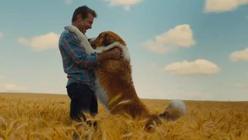 """В мережі з'явився перший трейлер до фільму """"Подорож хорошого пса"""": зворушливе відео"""