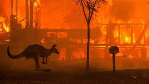 Австралия в огне: знаменитости отреагировали на сокрушительную трагедию