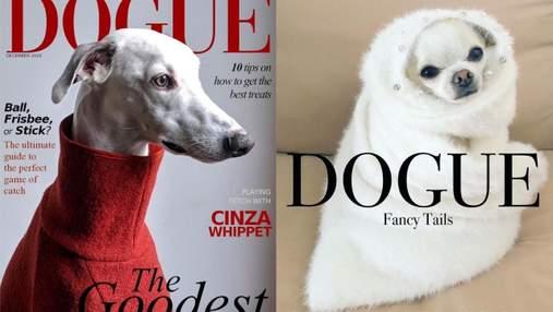 Якби собаки були зірками журналу Dogue: чому мережу захопив тренд з фото собак у стилі Vogue