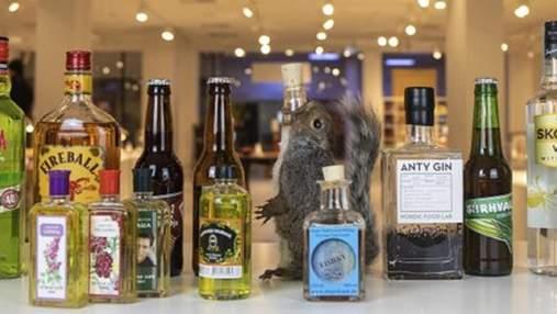 Вино из мышат и тюремных туалетов: в Швеции открыли выставку странного алкоголя