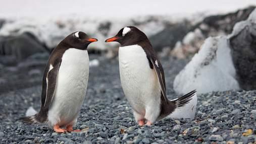Дружні обійми потрібні всім без винятку: добірка милих тварин, які знайшли собі друзів