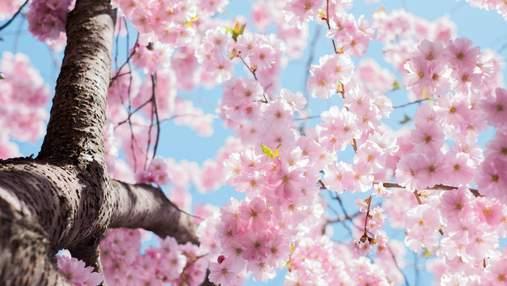 Картинки-привітання з першим днем весни: вітання, які змусять розквітнути