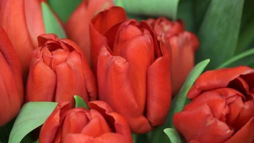 Картинки-привітання зі святом 8 Березня: вітання, від яких розквітатиме усмішка на обличчі