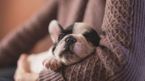 Найкумедніші картинки-привітання для соньків на Всесвітній день сну