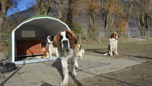 Музеи собак, куда вы можете прийти со своим любимцем или усыновить животное
