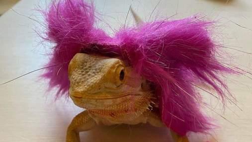 Кім Кардаш'ян та її стильна ящірка: як виглядає зірковий улюбленець – фото