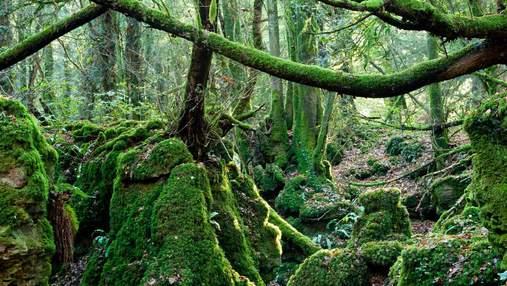 Загадочный Пазлвуд – лес, что вдохновил создателей Гарри Поттера, Властелина колец и не только