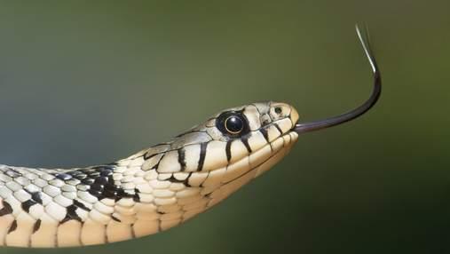 Обережно, змії: що робити при укусі гадюки і як вберегтися від цього