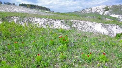 Образовались более 70 миллионов лет назад: 10 фактов о меловых горах на Харьковщине