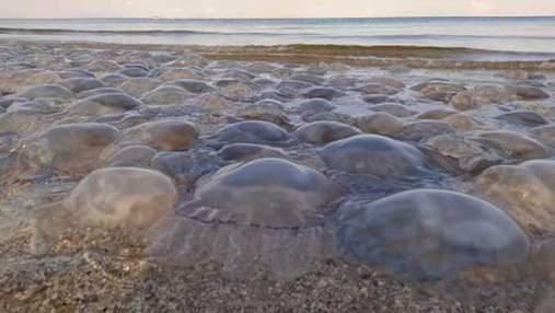 Гігантські медузи повернулися до курортної Кирилівки: в мережі з'явилося нове відео